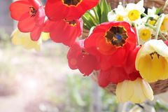 Backgrounds -- flowers in a basket Royalty Free Stock Photography