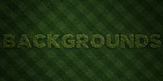 BACKGROUNDS - fresh Grass letters with flowers and dandelions - 3D rendered royalty free stock image. Can be used for online banner ads and direct mailers Royalty Free Stock Photo