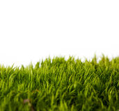 Backgrounds of fresh spring green grass. Isolated On White Stock Images