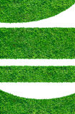 Backgrounds of fresh spring green grass Royalty Free Stock Photography
