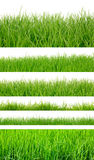Backgrounds of fresh spring green grass Stock Photo