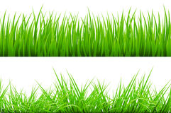 2 Backgrounds Of Green Grass, Isolated On White Background. Vector Illustration art Stock Image