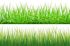 2 Backgrounds Of Green Grass,  On White Background, Vector Illustration. Art Stock Images