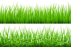 2 Backgrounds Of Green Grass,  On White Background, Vector Illustration. Art Royalty Free Stock Image