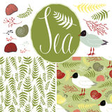 Backgrounds with gulls, shells and ferns. Sea set. Design elements Stock Image