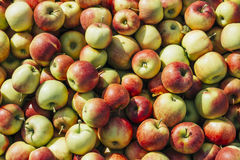 Backgrounds: Harvested Apples Stock Photo