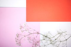 Backgrounds and layout. Horizontal Minimalistic geometric background in pastel white, pink and coral shade with a gypsophila stock photography