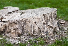 Backgrounds of old stump. (small depth of sharpness Stock Images