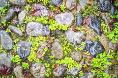 Backgrounds Of Pebble Walkway of full frame Stock Images