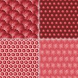 Backgrounds with pink roses. Stock Image