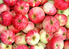 Backgrounds of red apples Royalty Free Stock Images