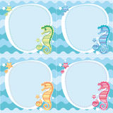 Backgrounds of seahorses Stock Photography