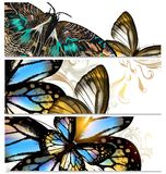 Backgrounds set with butterflies Stock Image