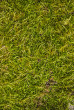 Backgrounds, Textured, moss Royalty Free Stock Photos