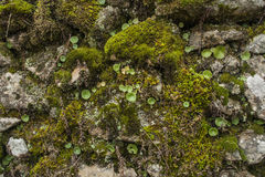 Backgrounds, Textured, moss Stock Photos