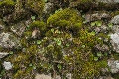 Backgrounds, Textured, moss Stock Photos
