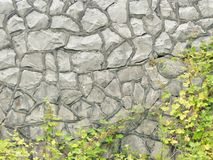 Backgrounds and textures concept. Stone wall and winding green bush.  royalty free stock photos