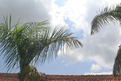 Backgrounds 064 - Top of Palm tree with Roof top and Sky Stock Photos