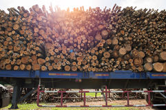 Backgroundund de madeira Imagem de Stock Royalty Free