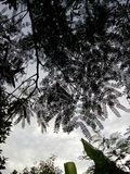 backgrounf неба падения Стоковые Фотографии RF