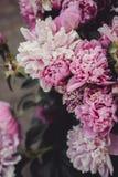 Backgrounf delle peonie per progettazione Foto del fiore di estate Fotografie Stock