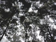 Backgroung леса Стоковая Фотография RF