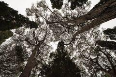 Backgroung com um círculo das árvores Imagens de Stock Royalty Free