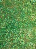 Backgroung della foglia e dell'erba Struttura dell'erba Fotografia Stock Libera da Diritti