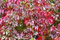 Backgroung di autunno Fotografia Stock Libera da Diritti