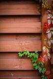 Backgroung di autunno Immagini Stock Libere da Diritti