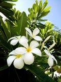 backgroung en feuille de palmier vert Image libre de droits