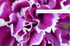 Backgroung floral fúcsia roxo do vetor Conceito romântico floral do fundo da flor para o projeto ilustração do vetor