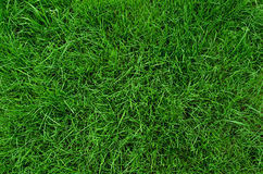 Backgroung of green grass Stock Photography