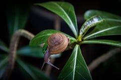 Backgroung pequeno do caracol Fotografia de Stock