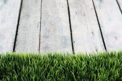 Backgrpund de la hierba Foto de archivo libre de regalías