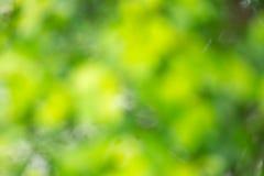 Backgrround vert brouillé Photo stock