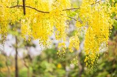 Backgrund de flores amarillas Fotos de archivo libres de regalías