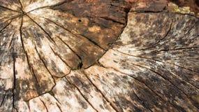 backhander текстуры стоковое изображение