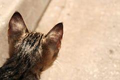 Backhead van een kat Stock Afbeelding