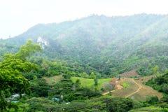 Backhoe и тележка работая в лесе стоковые фотографии rf