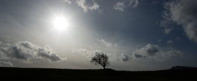 backlight δέντρο στοκ φωτογραφία με δικαίωμα ελεύθερης χρήσης