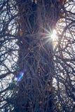 Backlight ενός κορμού ενός δέντρου που περιβάλλεται από πολλούς κλάδους στοκ εικόνα με δικαίωμα ελεύθερης χρήσης