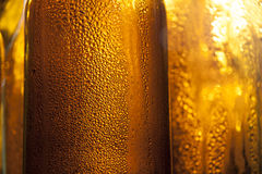 Backlight beer bottles Stock Photography