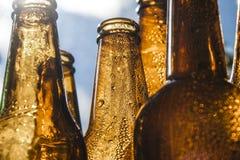 Backlight beer bottles. Backlit bottles of beer with hoarfrost Stock Image