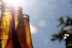 Backlight beer bottles. Backlit bottles of beer with hoarfrost Stock Images
