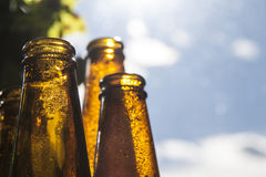Backlight beer bottles Royalty Free Stock Images