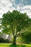 Backlight drzewo Zdjęcie Stock