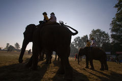 Backlight on elephants polo game, Thakurdwara, bardia, Nepal Stock Photos