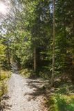 Backlight on the empty trail royalty free stock photo