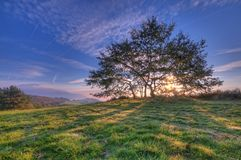 Backlight in the field. Sunlight filtering through the branches of a tree Stock Photo